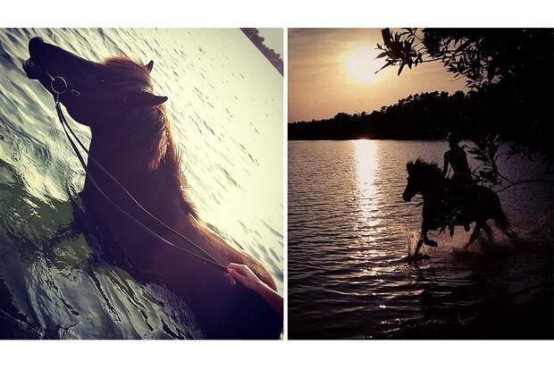 CAV Fotowettbewerb BR Pferde baden Corinna Nebel
