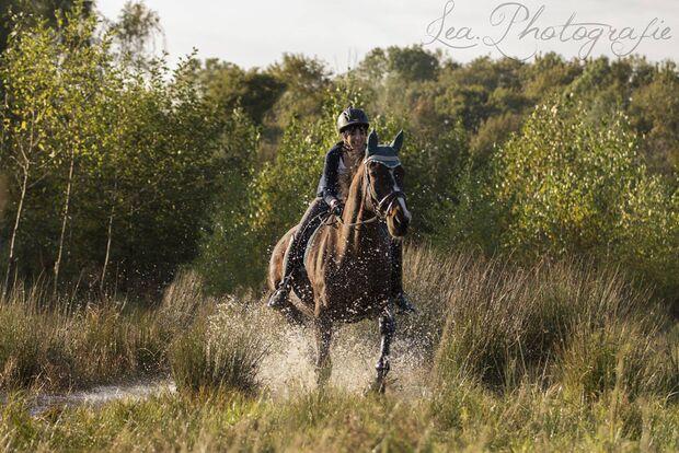CAV Fotowettbewerb BR Pferde baden Daniela H.