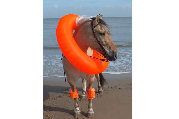 CAV Fotowettbewerb BR Pferde baden Eva