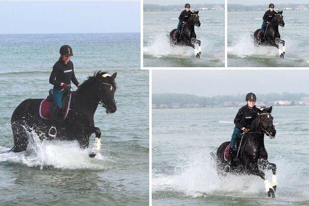 CAV Fotowettbewerb BR Pferde baden Heike Bähnke