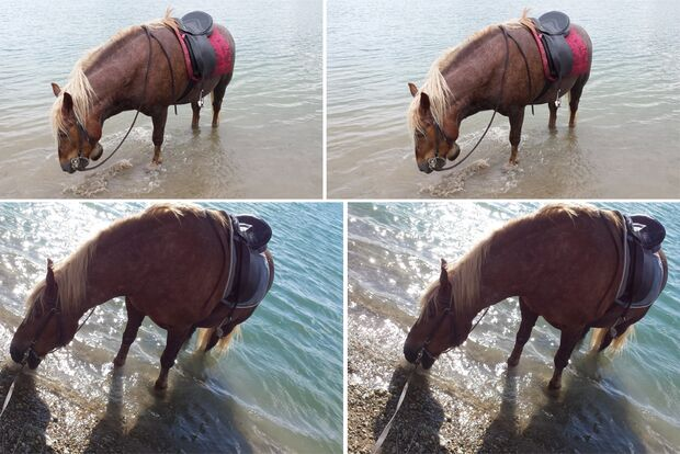 CAV Fotowettbewerb BR Pferde baden Jacky Bolz