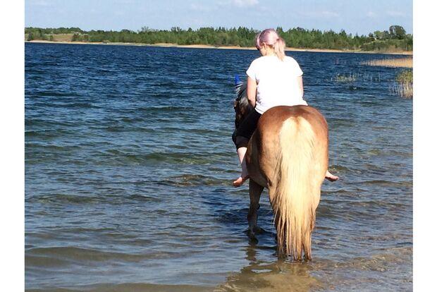 CAV Fotowettbewerb BR Pferde baden Jasmin Hanke