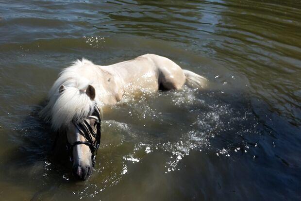 CAV Fotowettbewerb BR Pferde baden Jasmin Stech