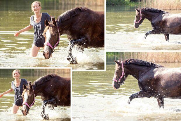 CAV Fotowettbewerb BR Pferde baden Jeannine Artz