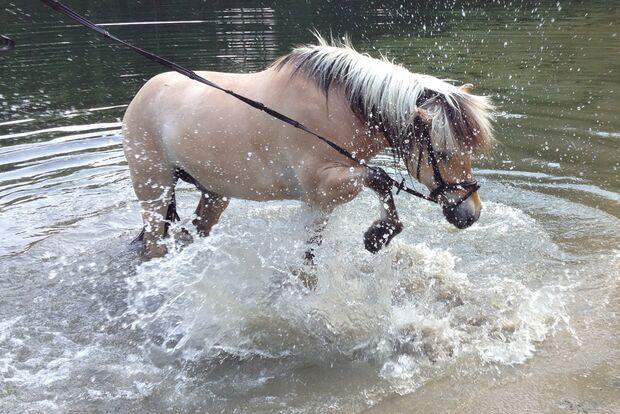 CAV Fotowettbewerb BR Pferde baden Julia Averbeck