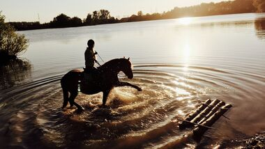 CAV Fotowettbewerb BR Pferde baden Julia Neubert