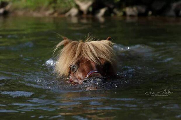 CAV Fotowettbewerb BR Pferde baden Julia VK