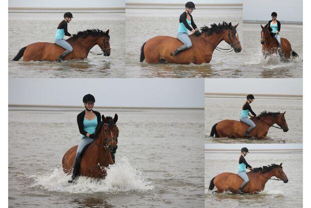 CAV Fotowettbewerb BR Pferde baden Justine D. Blöcker