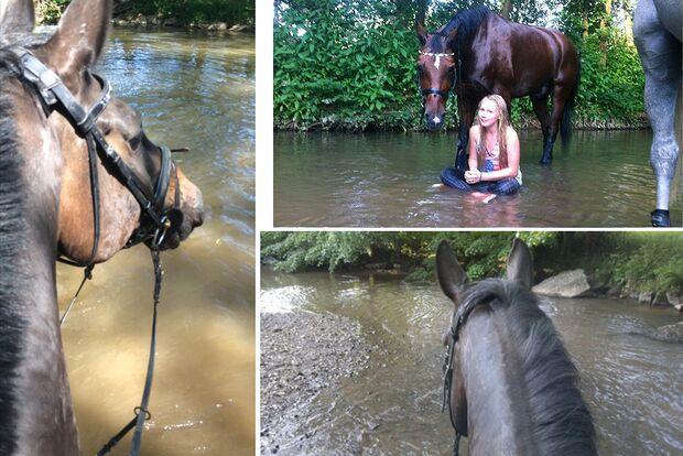 CAV Fotowettbewerb BR Pferde baden Katja Etzel