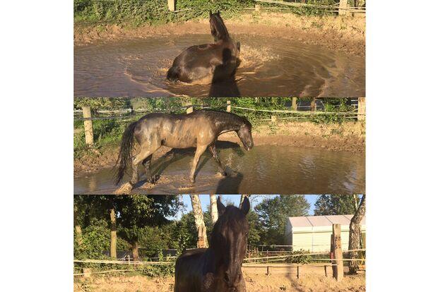 CAV Fotowettbewerb BR Pferde baden Lucille Schmidt