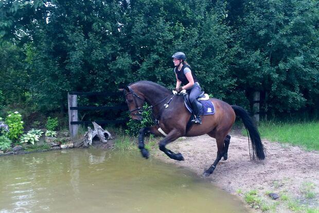 CAV Fotowettbewerb BR Pferde baden Melanie Röers