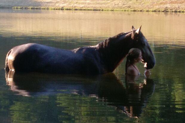 CAV Fotowettbewerb BR Pferde baden Mera Brockhage