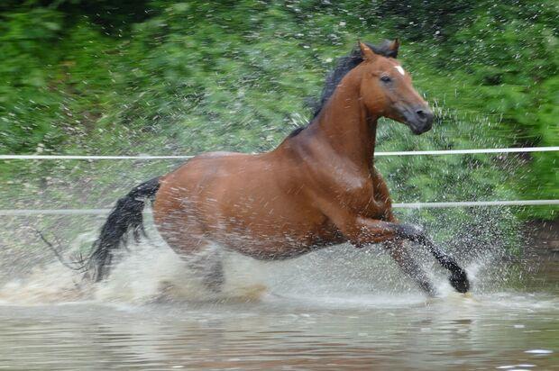 CAV Fotowettbewerb BR Pferde baden Michaela Brockhaus