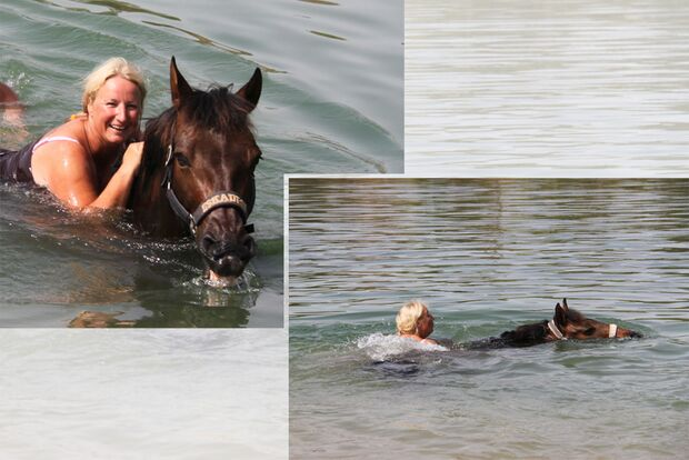 CAV Fotowettbewerb BR Pferde baden Monika Schmedders 1