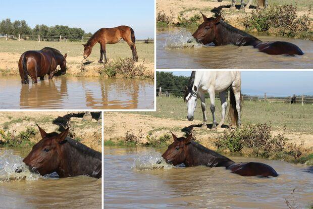 CAV Fotowettbewerb BR Pferde baden Monika Schmedders