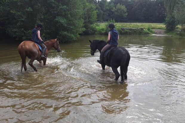 CAV Fotowettbewerb BR Pferde baden Nadine Henning