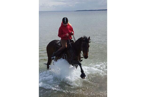 CAV Fotowettbewerb BR Pferde baden Nadja Modrow