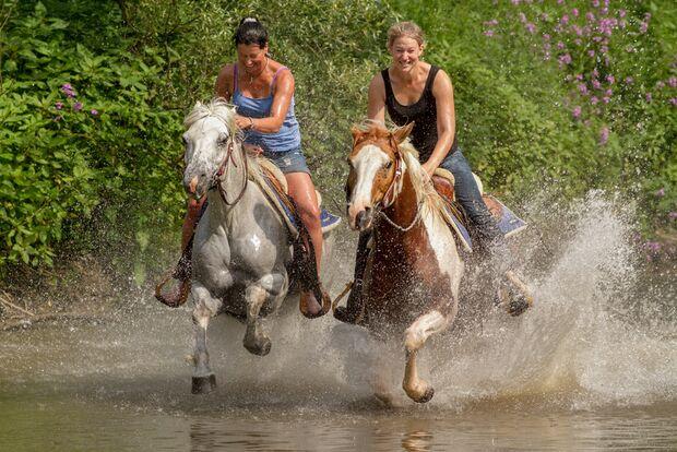 CAV Fotowettbewerb BR Pferde baden Nicole Bungard