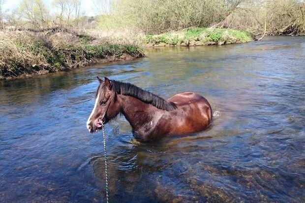 CAV Fotowettbewerb BR Pferde baden Shirin Wessel