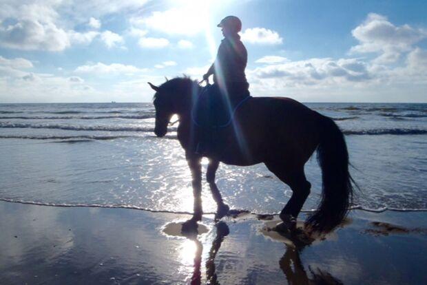 CAV Fotowettbewerb BR Pferde baden Sonja Funke