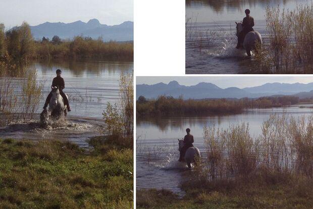 CAV Fotowettbewerb BR Pferde baden Stefanie Seebauer 1