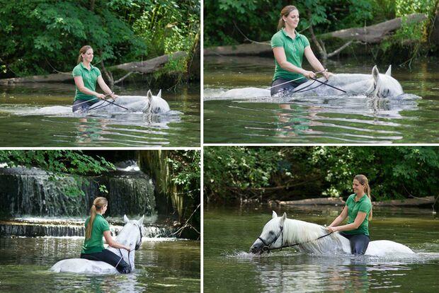 CAV Fotowettbewerb BR Pferde baden Stefanie Seebauer