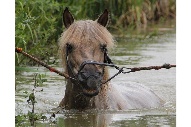 CAV Fotowettbewerb BR Pferde baden Stefanie Zimmermann