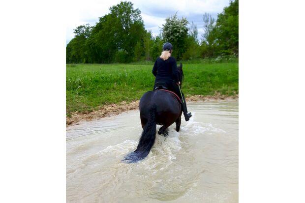 CAV Fotowettbewerb BR Pferde baden Stephanie Schmidt