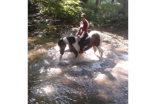 CAV Fotowettbewerb BR Pferde baden Susi Uhrig