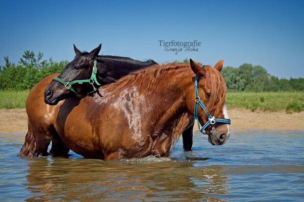CAV Fotowettbewerb BR Pferde baden Svenja Ache
