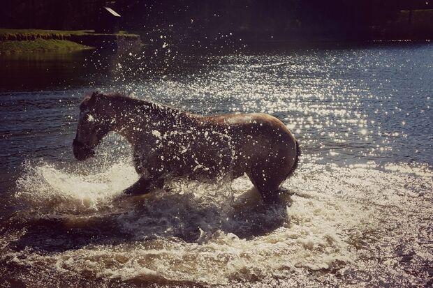 CAV Fotowettbewerb BR Pferde baden Svenja Friede