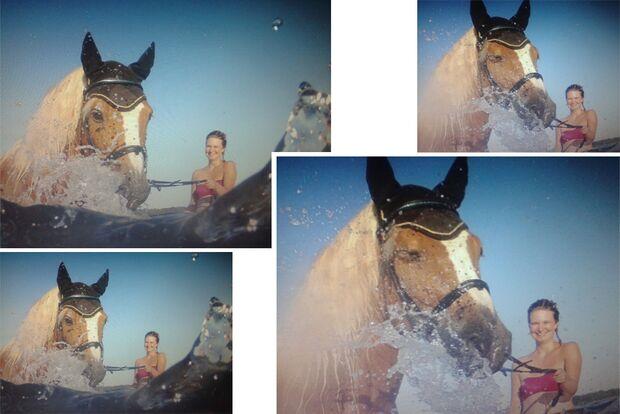 CAV Fotowettbewerb BR Pferde baden Sylvia Schumann