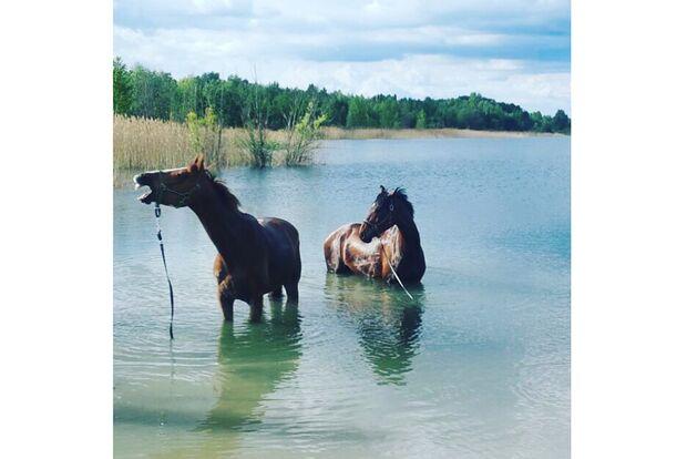 CAV Fotowettbewerb BR Pferde baden Tina