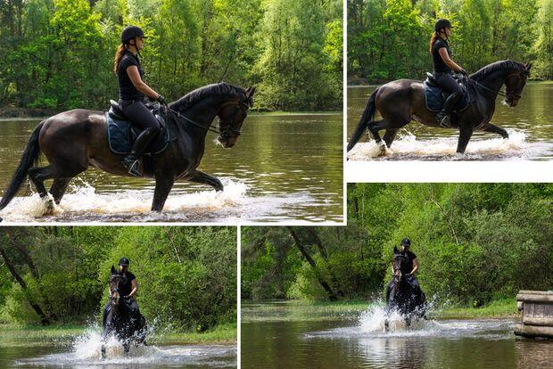 CAV Fotowettbewerb BR Pferde baden Valeska Görtemaker
