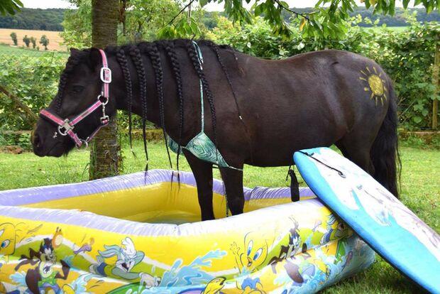 CAV Fotowettbewerb BR Pferde baden Vanessa Wagner