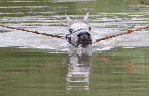 CAV Fotowettbewerb BR Pferde baden Waldemar Hermann