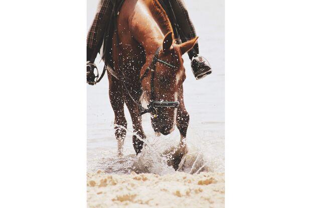 CAV Fotowettbewerb BR Pferde baden Wiebke Krüger