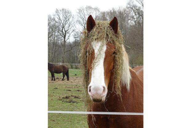 CAV Fotowettbewerb BR Pferdefrisuren Andrea Eicke