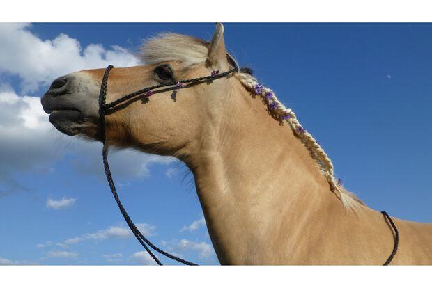 CAV Fotowettbewerb BR Pferdefrisuren Carola Hiemer