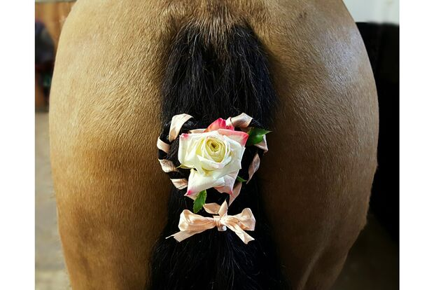 CAV Fotowettbewerb BR Pferdefrisuren Christina Cox