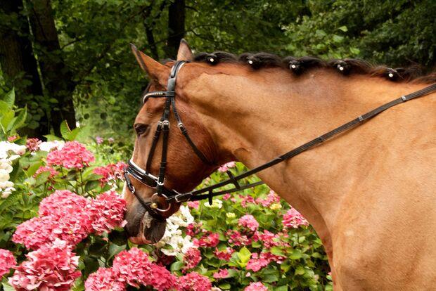 CAV Fotowettbewerb BR Pferdefrisuren Christina Sax