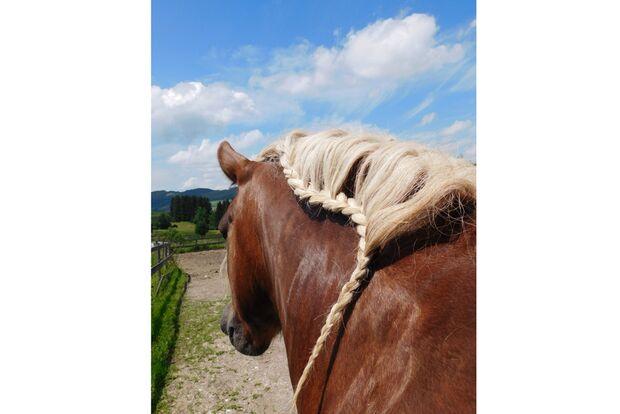 CAV Fotowettbewerb BR Pferdefrisuren Elke Rosewich