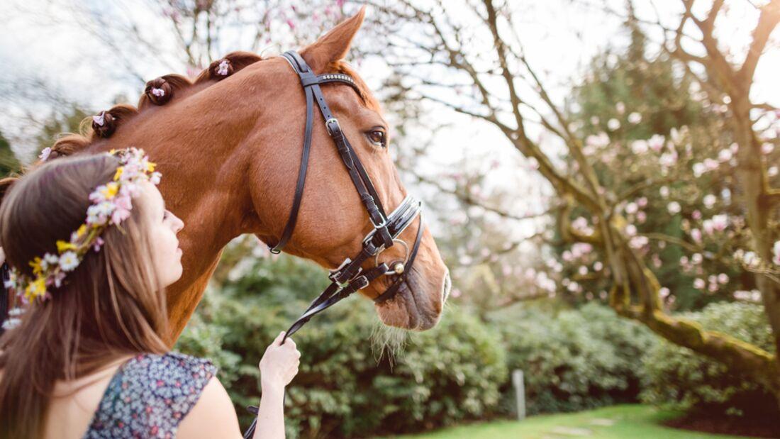 CAV Fotowettbewerb BR Pferdefrisuren Katharina Sax