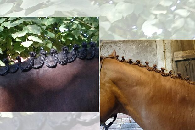 CAV Fotowettbewerb BR Pferdefrisuren Marion Konert