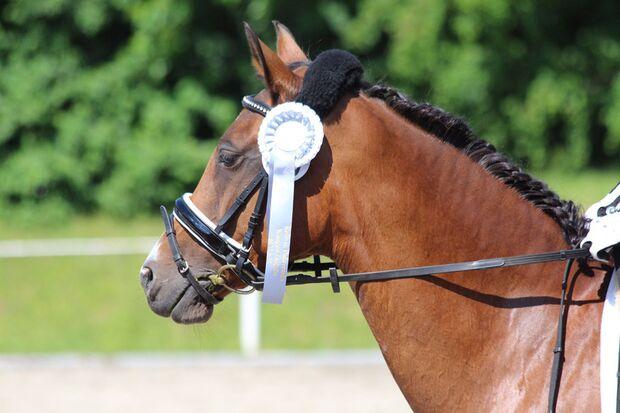CAV Fotowettbewerb BR Pferdefrisuren Melanie Blas