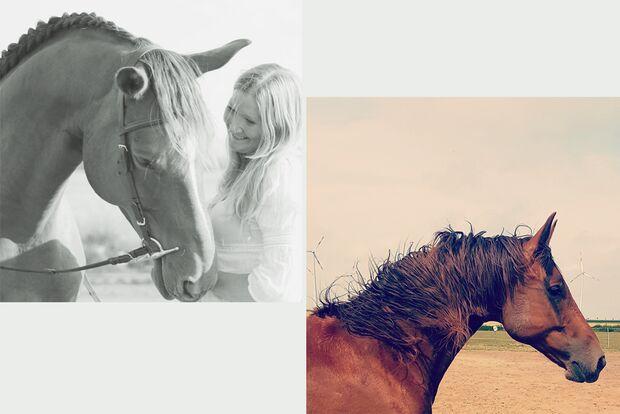CAV Fotowettbewerb BR Pferdefrisuren Nadine James