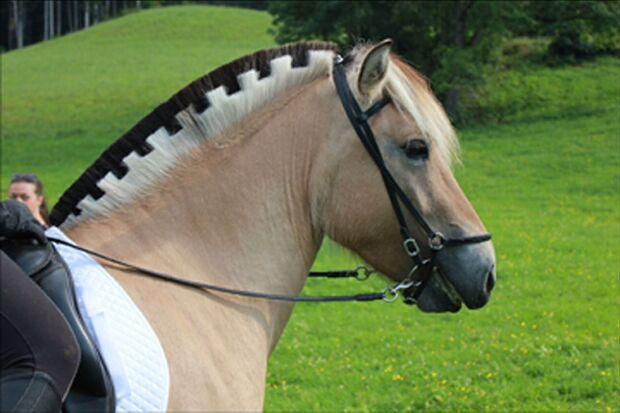 CAV Fotowettbewerb BR Pferdefrisuren Rebecca Ranacher