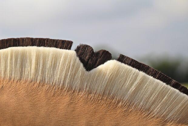 CAV Fotowettbewerb BR Pferdefrisuren Theresa Losert