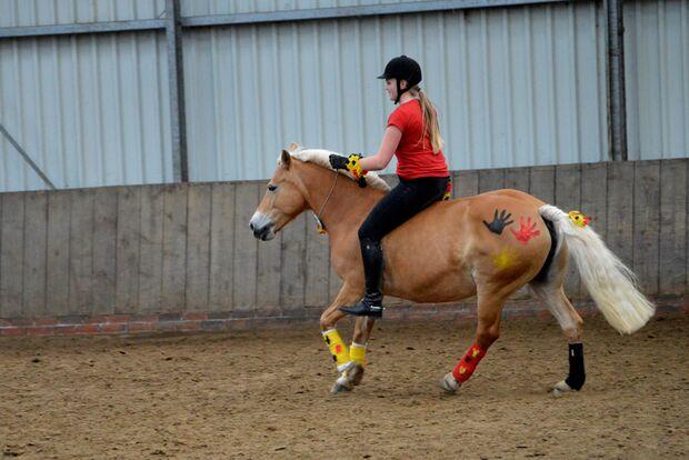 CAV Fotowettbewerb BR ballverrückte Pferde Amke Toben