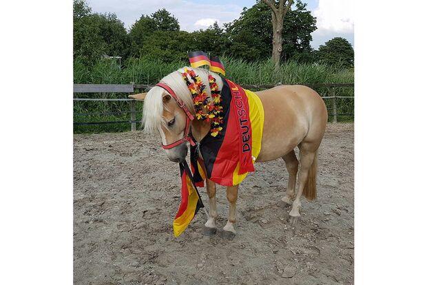 CAV Fotowettbewerb BR ballverrückte Pferde Amke